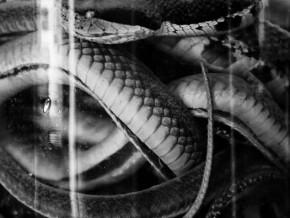 snakewine-(1)