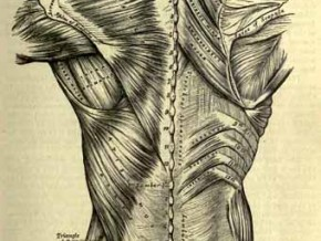 blk_illusion_1363683743_5-Grays-anatomy